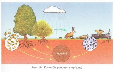 Екосистема екосистеми своєї