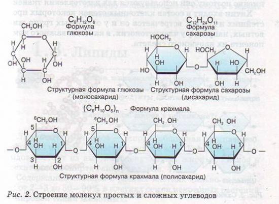 Почему не молекулы белков или углеводов а именно молекула днк