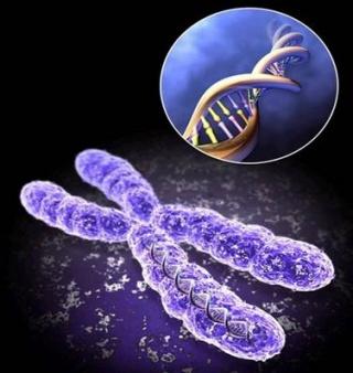 Хромосома та іі вид в ДНК