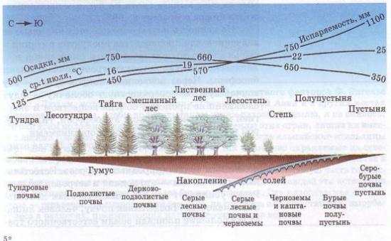 Взаимосвязь типов почв с